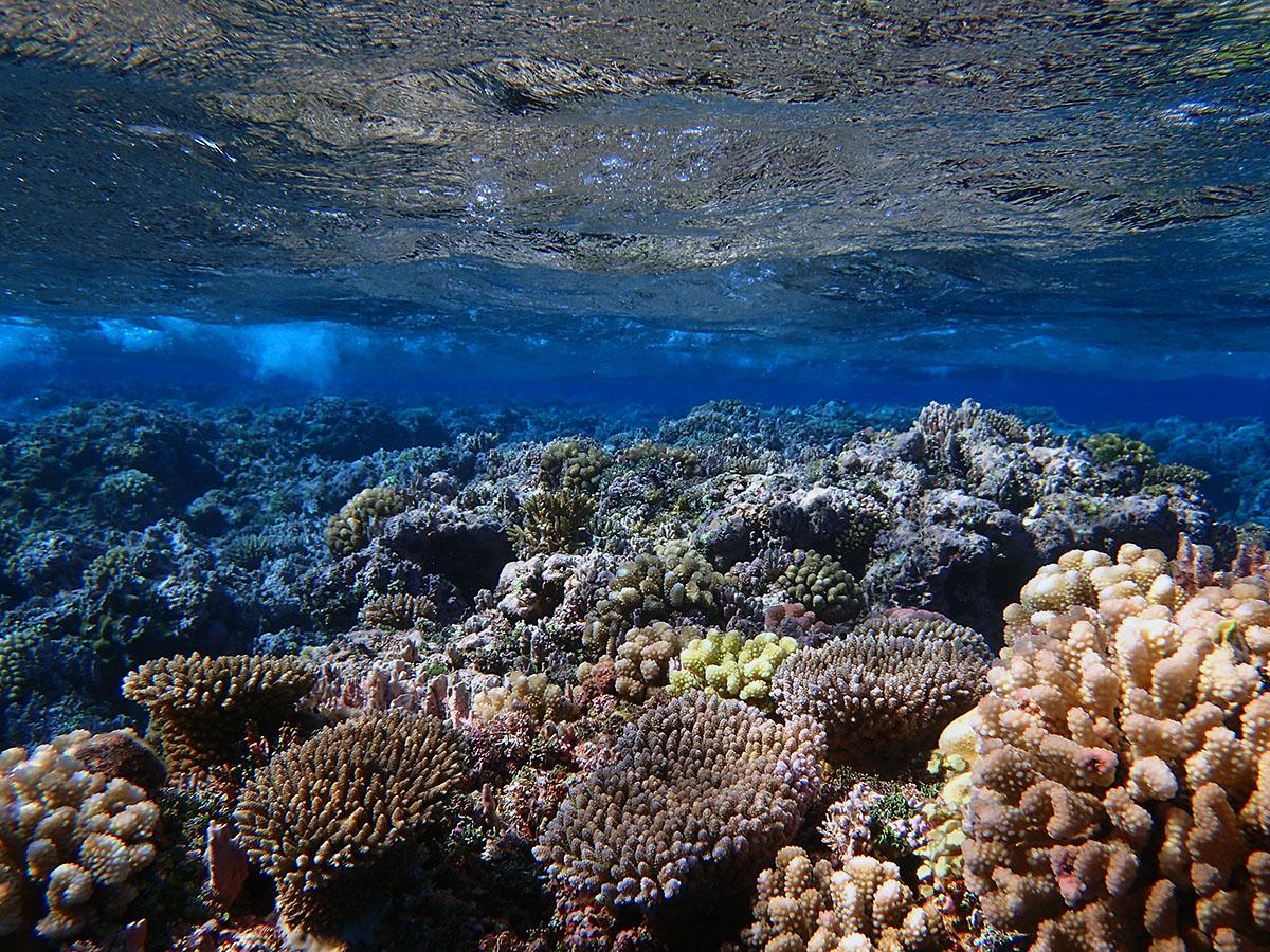 Corals near Diamond Islet