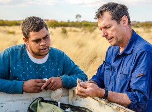 Patrick Butler Green and Mark Cowan discuss the morning's catch of small mammals at Kiwirrkurra IPA, Brian Hawkins © Copyright Director of National Parks