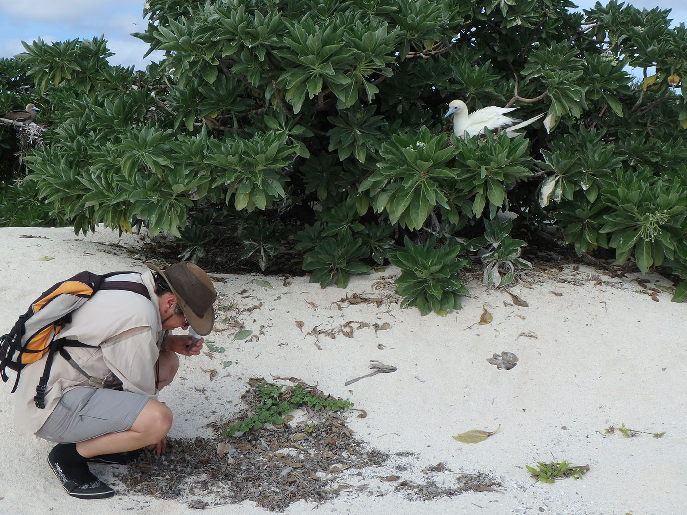 Barbara searching for spiders amongst the leaf litter