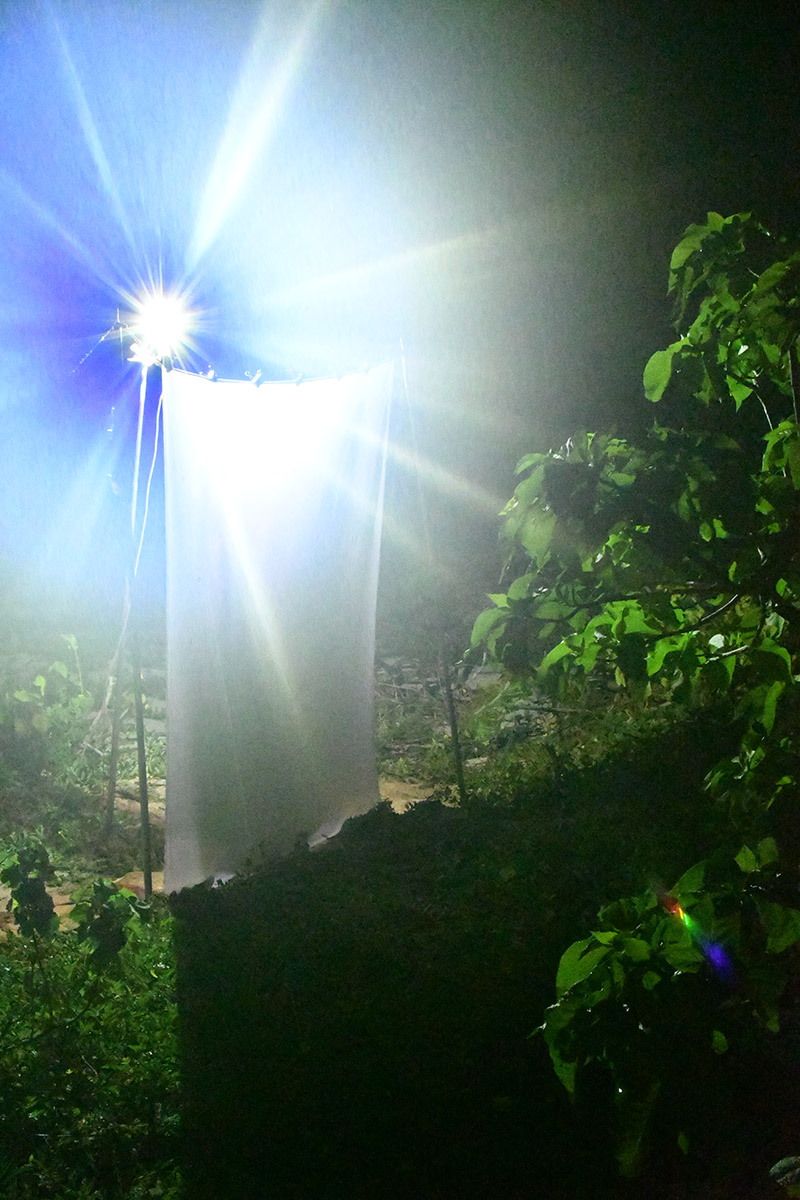 Andreas' light trap