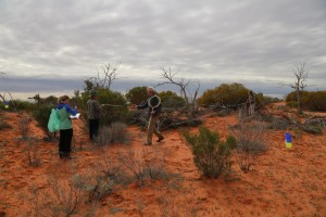 And they're off. Bush Blitz scientists begin collecting at Standard Survey Site 1.