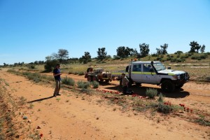 The drive in to Andamooka Homestead: Kate and Karl examining Sturt's Desert Peas.