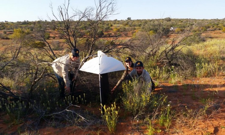 Candice, Ingrid and Matt help Ben with a malaise trap - see the video