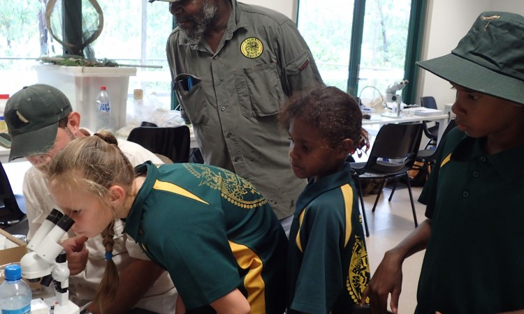 Laura Ranger Uncle Roy Banjo studies true bugs at the Laura School laboratory visit (image credit S. Nally)