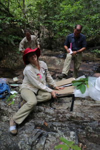 Raelee Kerrigan, Stuart Worboys and Darren Crayn press plant collections deep in a rainforest gully