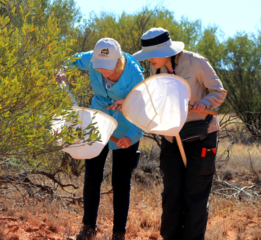 Donna Azzi and Marina Cheng (PhD candidate), Henbury Bush Blitz 2013