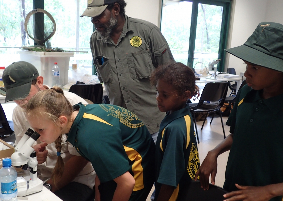 Laura Ranger Uncle Roy Banjo studies true bugs during the Laura School laboratory visit (image S. Nally)