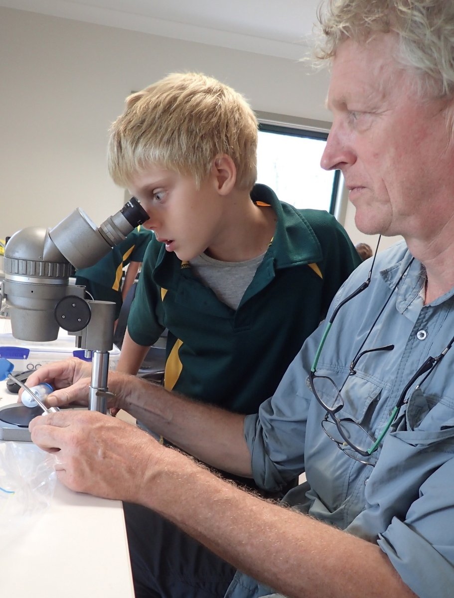 A student helps Remko Leijs identify a native bee (image S. Nally)