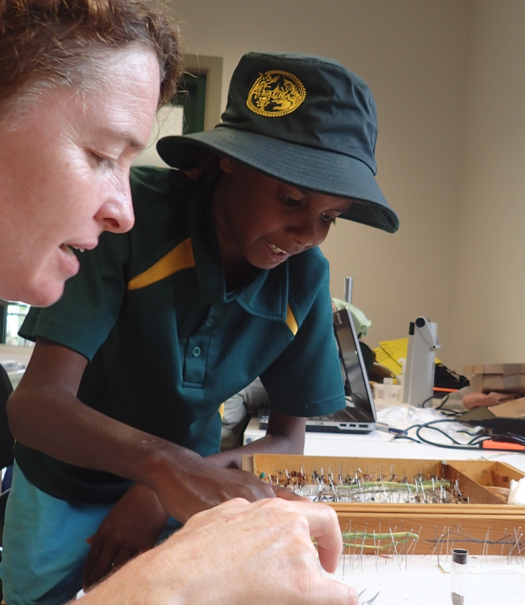 A student helps Susan Wright pin new specimens for the Queensland Museum (image S. Nally)
