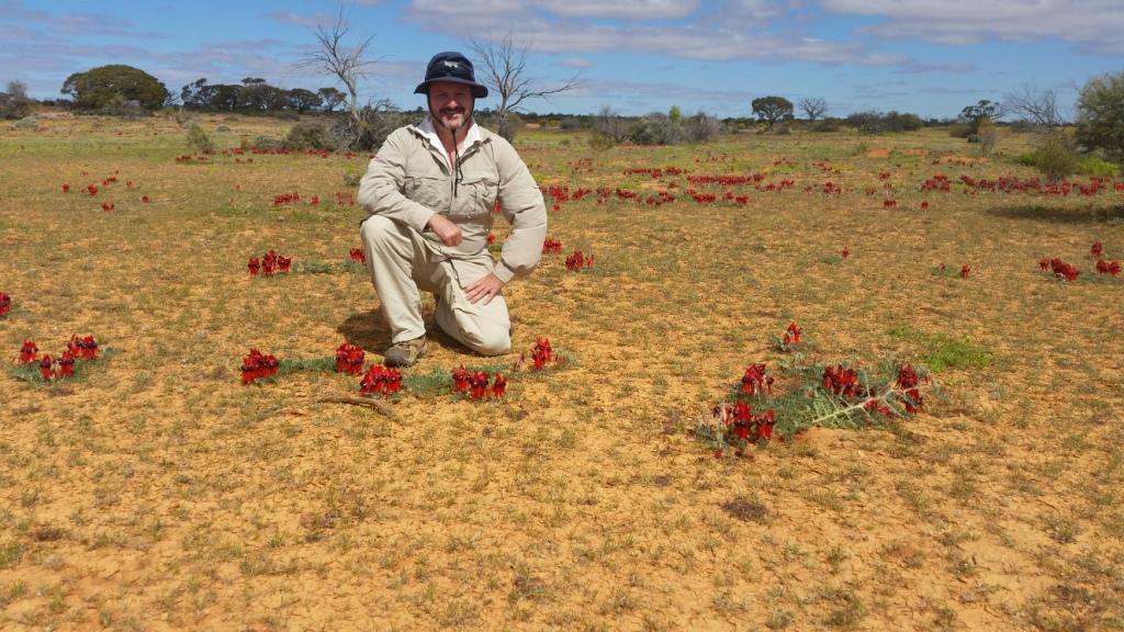 Pete tiptoeing through the Sturt's Desert Peas (Swainsona formosa)