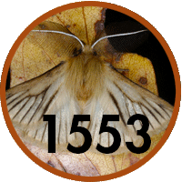 1553 new fauna species