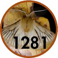 quick-stats-01-fauna