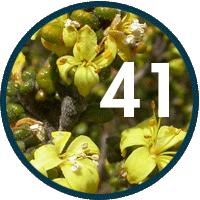 Forty-one new flora species
