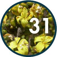 quick-stats-02-plants