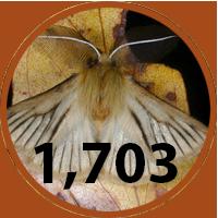 1,703 new fauna species