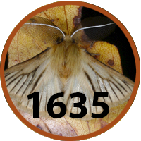 fauna 1635