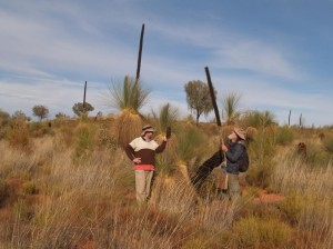 Desert Grass Trees (Xanthorrhoea thorntonii)