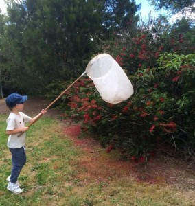 Logan Morris collecting insects © J Harding