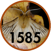 1585 new fauna species