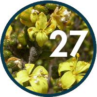27 new vascular plant species