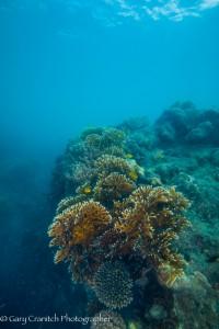 reef nr Hook Island